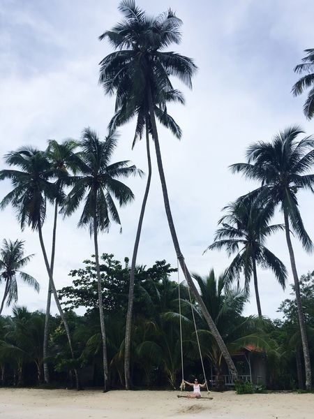 Vocation Palm Tree Tree Beach Tranquility Scenics Beauty In Nature Sky Outdoors Growth Sea Nature Day