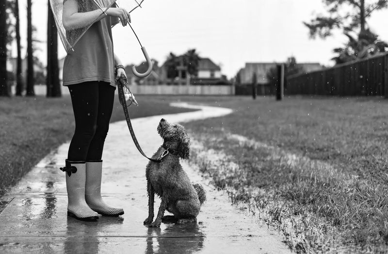 Low section of woman with dog on footpath during rainy season
