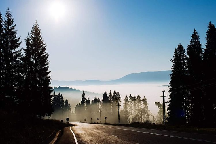 Road amidst silhouette trees against clear sky