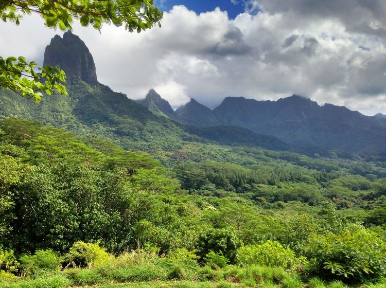 Beauty In Nature Day Landscape Moorea Mountain Nature No People Outdoors Sky Tree