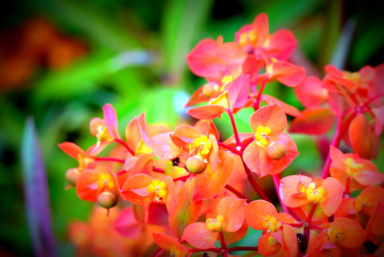 Beauty In Nature Botany Close-up Day Flower Flower Head Focus On Foreground Fragility Freshness Growth Nature Orange Color Outdoors Petal Plant