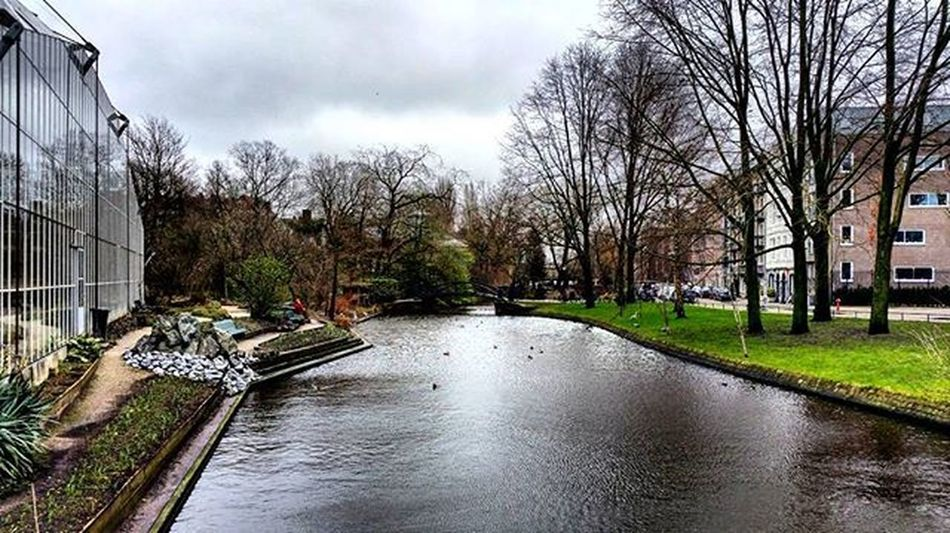 Hortus botanicus🌿🌳!!Trees Canals Amsterdam Amsterdamcity Holland Netherlands Green Gardens Nature Naturephotography City Instacity Hortus Botanic Clean Clouds Cloudy Igers