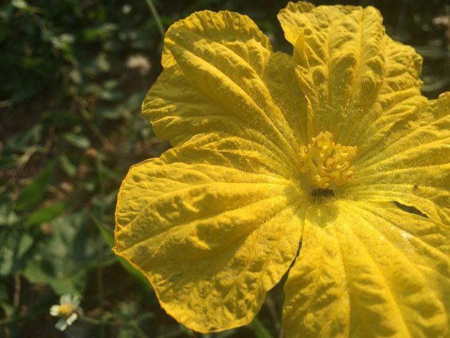 Flowers Yellow Bee Woo!