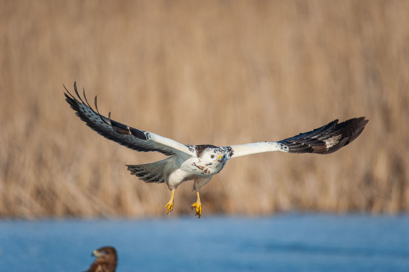 Bird flying over a water