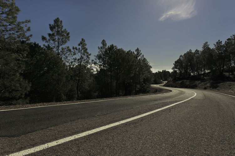 Road between pines Cloud Curves Descent Pine Asphalt Beauty In Nature Blue Clear Sky Curved  Curved Lines Curved Road Curves And Lines Day Landscape Nature No People Outdoors Pine Trees Road Scenics Sky The Way Forward Transportation Tree