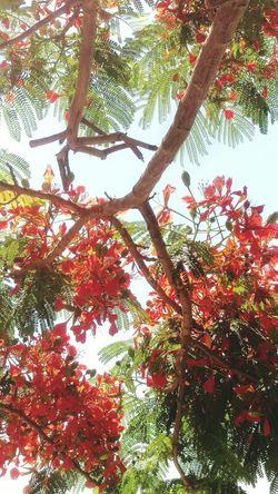 Fuerteventura summer trees Nature Beauty In Nature