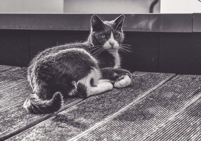 Fuji X-M1 Animal Themes Black And White Bw_collection Cat Close-up Day Domestic Animals Domestic Cat Feline Full Length Indoors  Kitten Looking At Camera Lying Down Mammal No People One Animal Pets Portrait Relaxation Schwarzweiß Whisker Grumpycat Welcome To Black