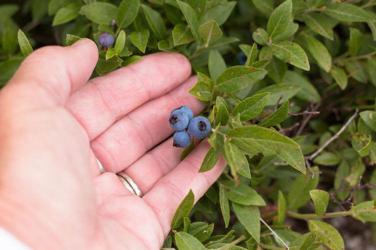 Close-up of hand holding ladybug on plant