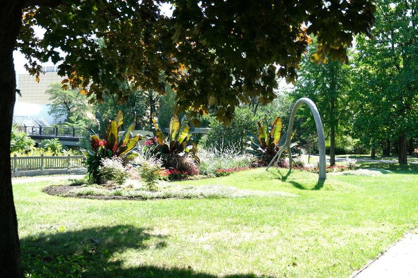 Field Domestic Garden Park Grassland Garden Botanical Green
