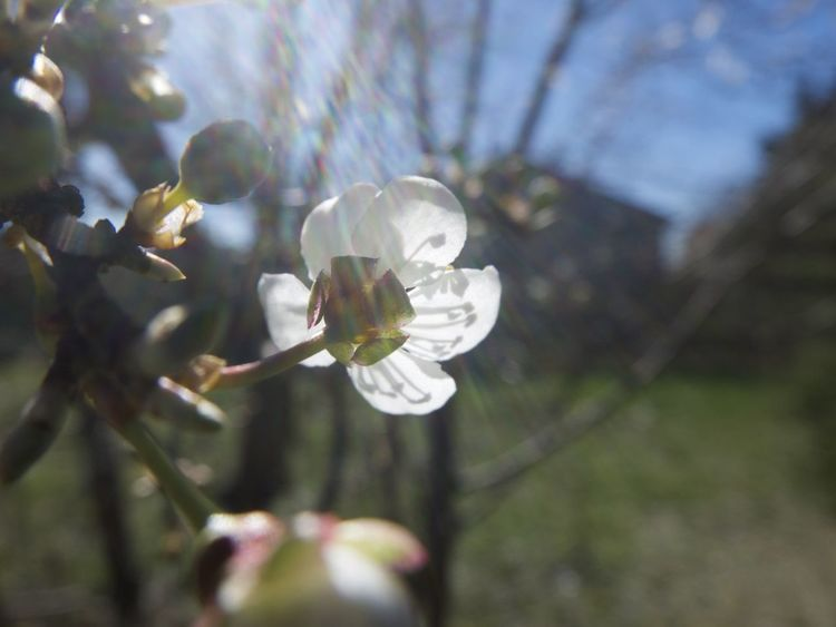 Beauty In Nature Flower Flowers Growing Macro