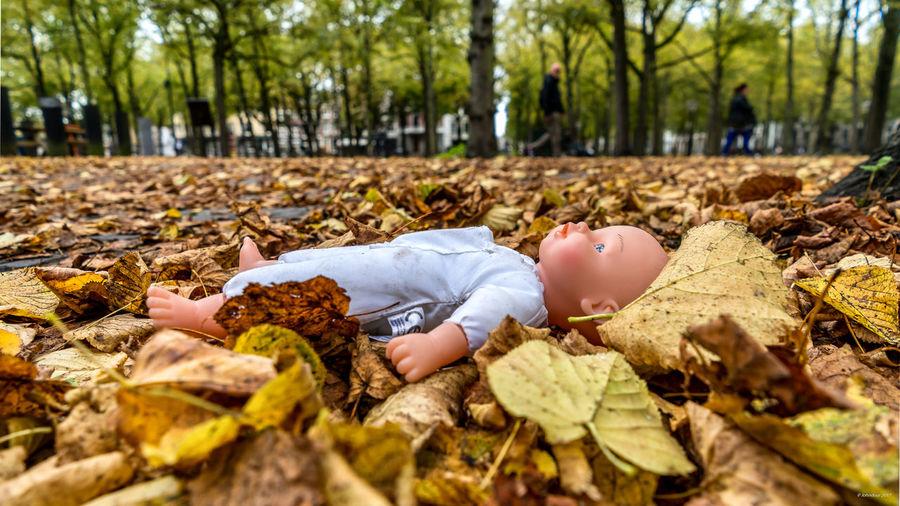 Full length of girl lying on tree