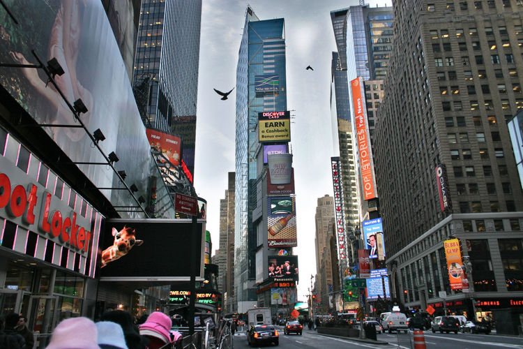 Adapted To The City doves and a digital giraffe in Times Square NYC. New York City Skyscraper Urban Skyline Architecture Cityscape Architecture Animal Theme Flying Bird NYC United States Modern Architecture Modern Building Modern City Digital Animal Skycrapers