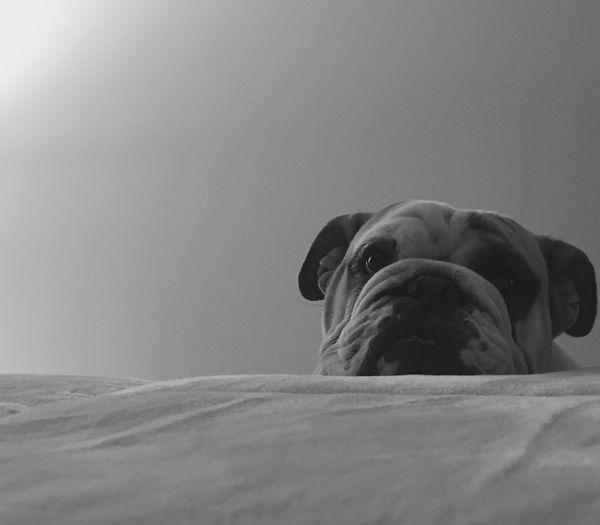 Dog in bedroom