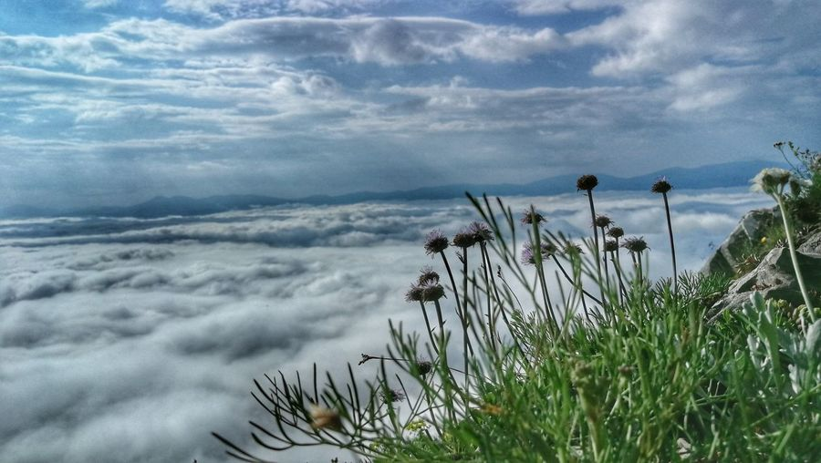 Horizon Over Clouds Beauty In Nature Hiking Nature Water Flower Tree Sky Grass Landscape Cloud - Sky
