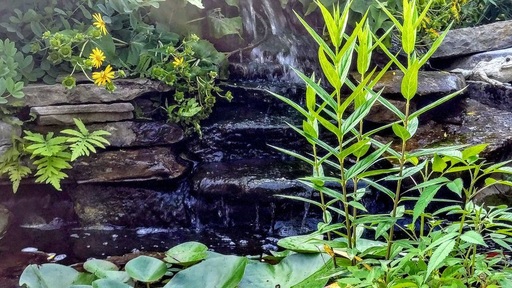 Pond. Plant Growth Outdoors No People Water Beauty In Nature Rocks Personal Perspective Relaxation Flower