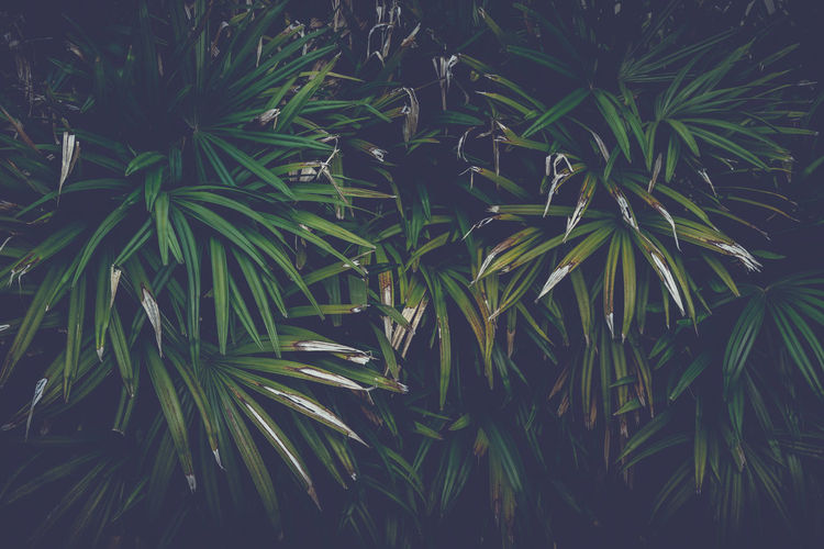 The leaves of