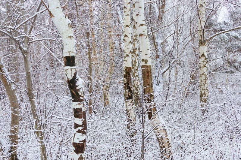 Snow covered land and trees