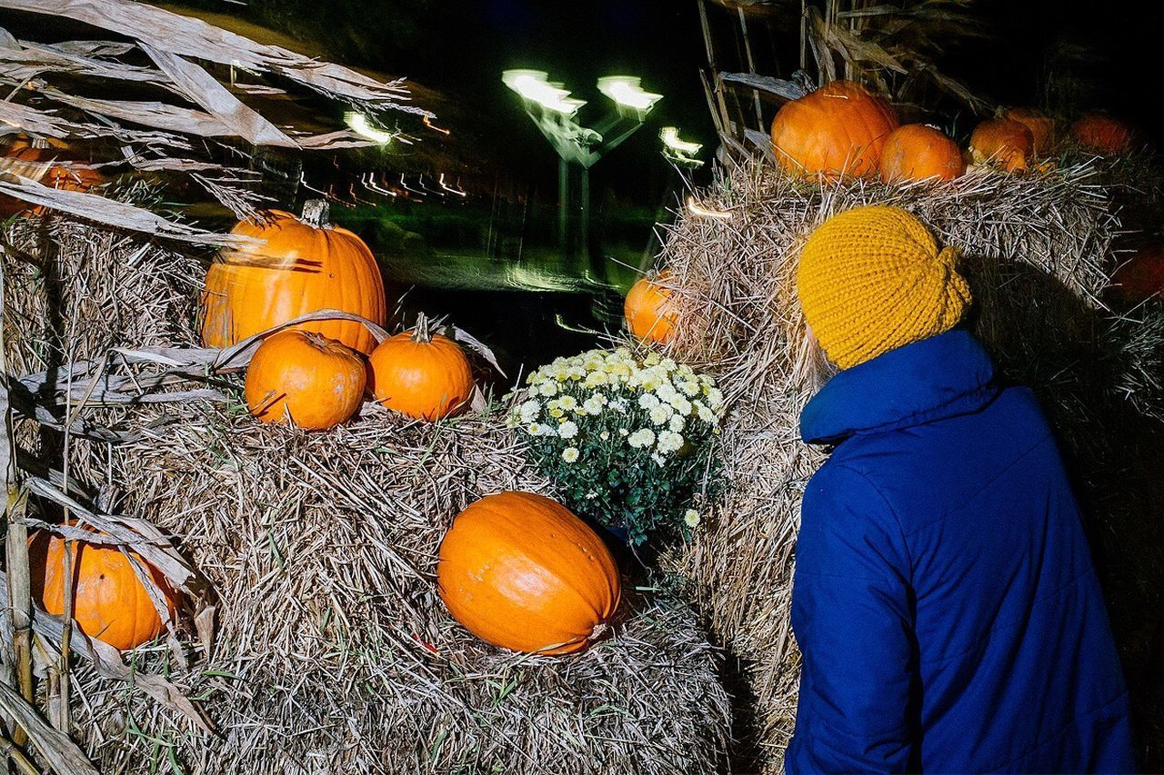 real people, pumpkin, rear view, one person, outdoors, day, men, food, women, halloween, adult, people