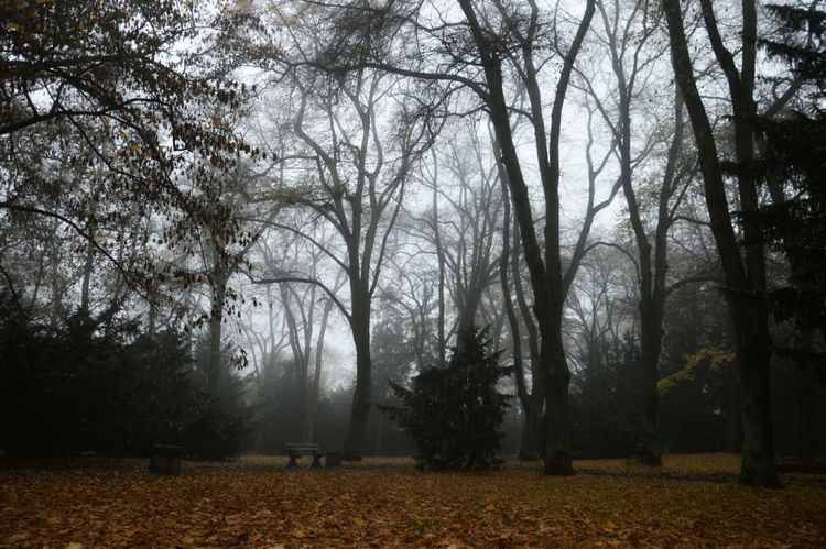 Park Trees Foggy Day Fallen Leaves Autumn Trees Autumn 2015 November Autumn Melancholy Autumnal Mood Getting Inspired