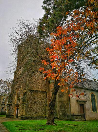 The Church In