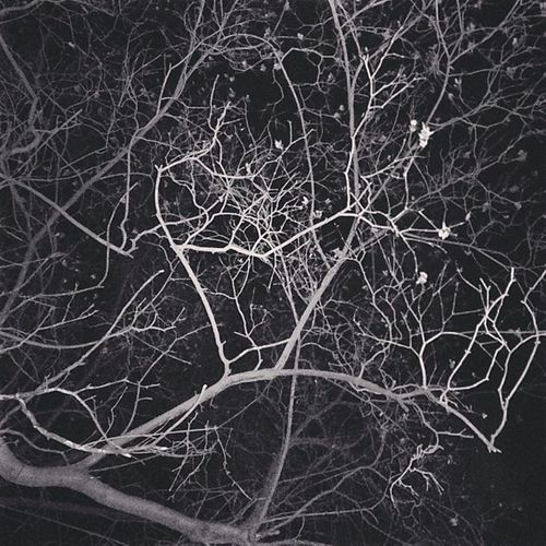 Moscow City Wood , Leaves , Branches Sky The Night Darkness . Fear of the Dark The Ghost of a Poltergeist .