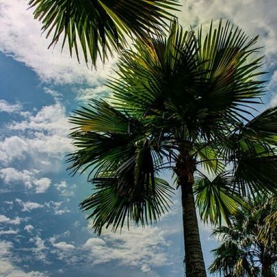 Damansara Thecurve Streetphotography Scenery Trees Cloudysky Nature Green