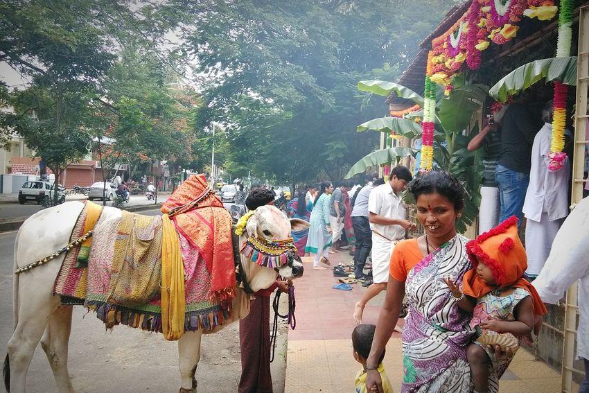 GaneshChaturthi India Bangalore Culture Colors Life Traditional Tadaa Community EyeEm Gallery