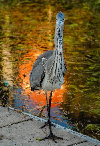 Heron perching on the riverside
