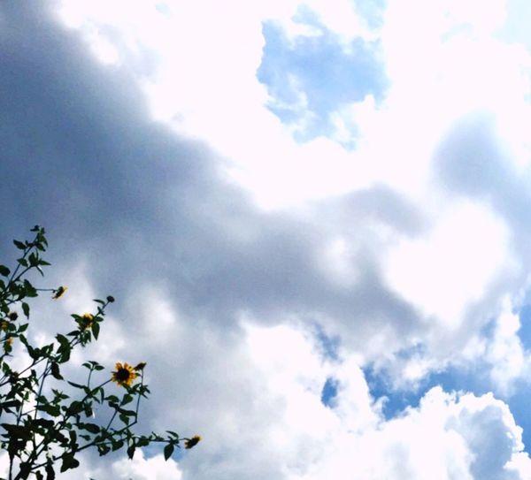 ひまわり越しの空を撮ったら…偶然、雲がハートに*.+゜ IPhoneography 青空 ハート雲 雲 はーと Heart