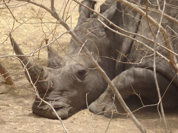 Bandia reserve African Safari Animal Themes Animal Wildlife Animals In The Wild Bandia Reserve Day Field Mammal Nature No People Outdoors Safari