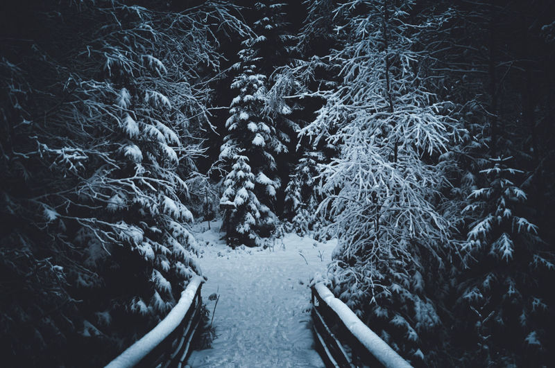 High angle view of snow covered land and trees in forest