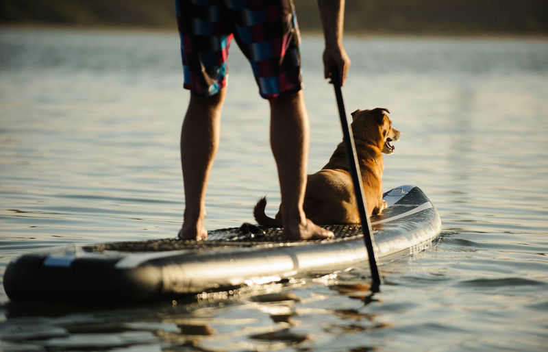 Mix breed dog on stand up paddleboard with man Activity Dog Man Mix Breed Mixed Breed Paddle Paddle Boarding Paddleboarding Sport Summer Sup Water Sports