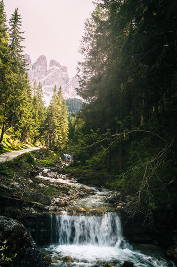 South Tyrol Beauty In Nature Scenics - Nature Water Tree Plant Flowing Water Nature Motion Forest Mountain Waterfall Land Environment Long Exposure Flowing Power In Nature Outdoors South Tyrol Nikon EyeEm Gallery EyeEm Nature Lover EyeEm Best Shots EyeEm Selects EyeEm Best Edits EyeEm Masterclass