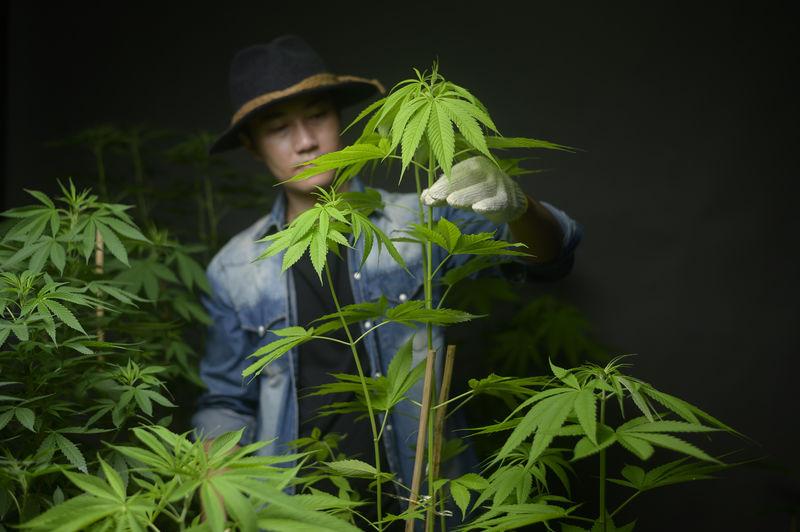 Boy holding green plant against black background