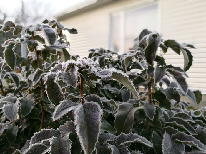 Winter House Bush Tree Frost Ice Needles Ice Cold Freezing Leaves Nature Day Plant Outdoors Growth No People Close-up Fragility Beauty In Nature