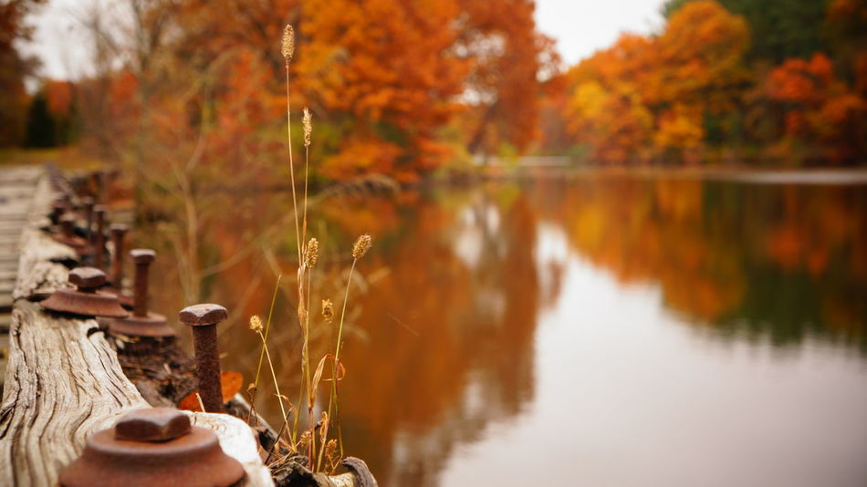 Autumn Autumn Collection Autumn Colors Beauty In Nature Day Growth Lake Landscape Macro Nature No People Outdoors Overcast Reflection Scenics Screw Selective Focus Train Tracks Tranquil Scene Tranquility Tree Water