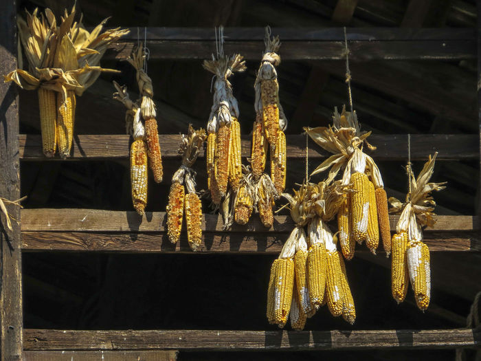 Light And Shadow Food No People Hanging Corn Outdoors Wood - Material Day Nature Freshness Yellow Tradition Lifestyles Healthy Eating Farm Life