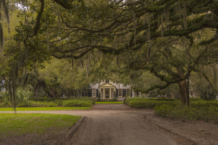 Architecture Beauty In Nature Branch Brays Island Day Entrance Growth Live Oak Nature No People Outdoors Plantation House Southern Living Tara Taramae Tree