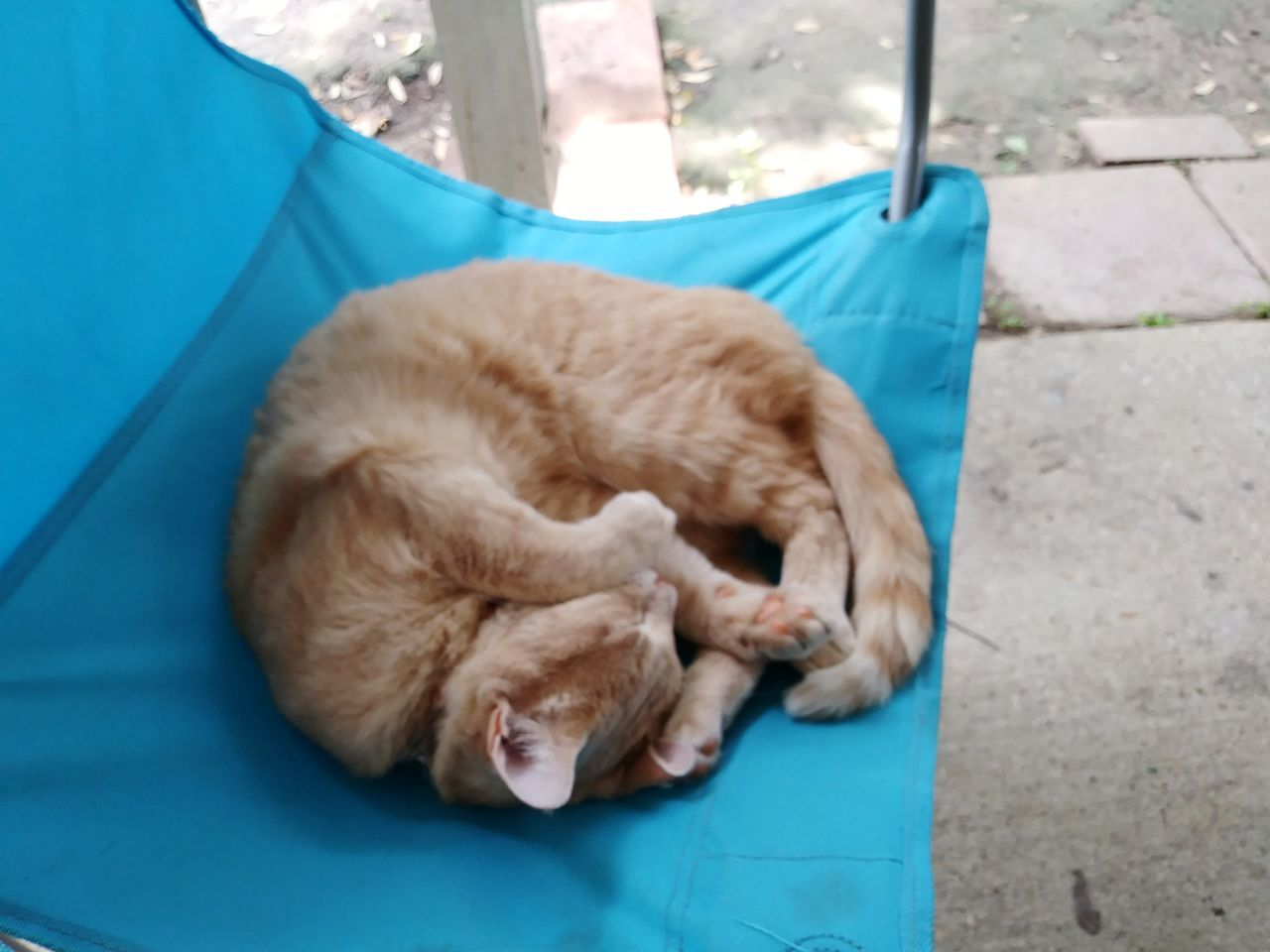 mammal, domestic cat, pets, animal themes, sleeping, domestic animals, one animal, feline, relaxation, eyes closed, high angle view, ginger cat, no people, lying down, day, outdoors
