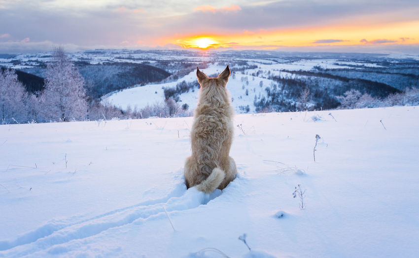 View of an animal during sunset
