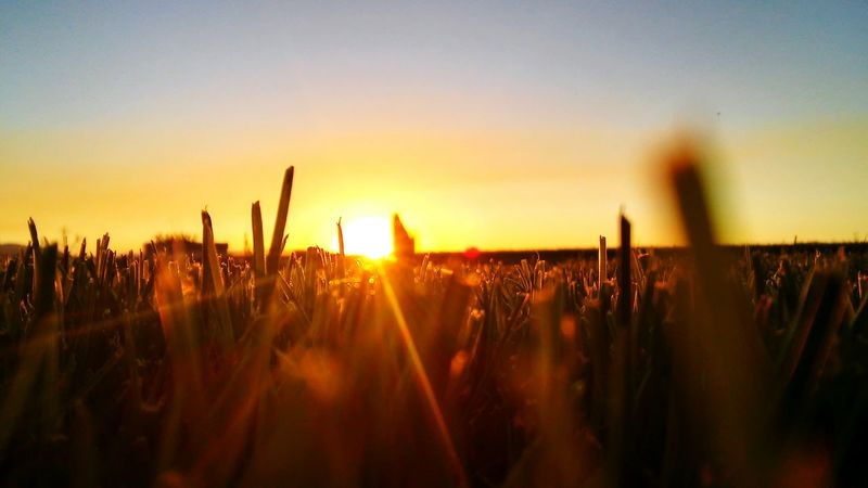 Taking Photos Check This Out Relaxing Enjoying Life Grass Sunset Beautiful Beautiful Sunset Relaxing Time Peaceful View Ahhh Peaceful Evening Relaxing Moments