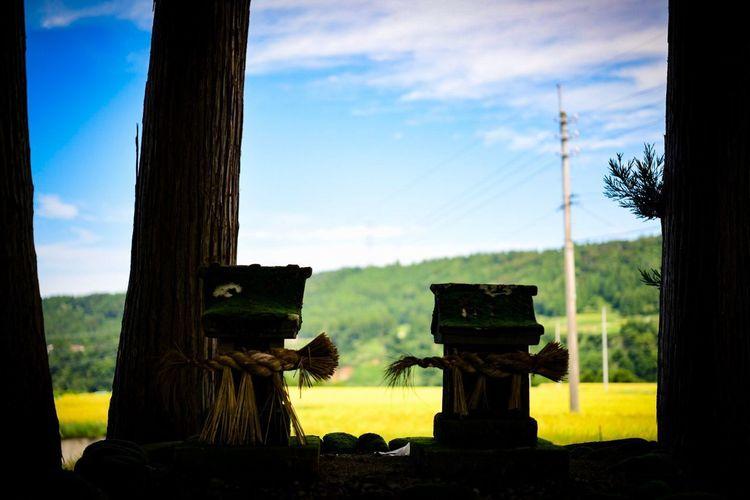 ここから見えるこの風景を、思わず崇めたんだろうなぁ。 Shinto Shrine Shrine Sky Tree Plant Cloud - Sky Nature No People Tree Trunk Land Field Trunk Outdoors Wood - Material Day Tranquility Environment Landscape Architecture Tranquil Scene