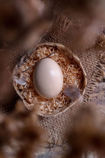 only one egg