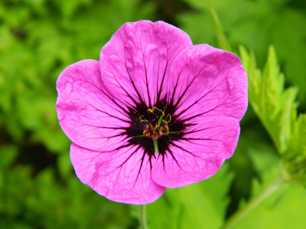 flower, nature, petal, growth, flower head, fragility, beauty in nature, plant, freshness, blooming, no people, day, outdoors, close-up