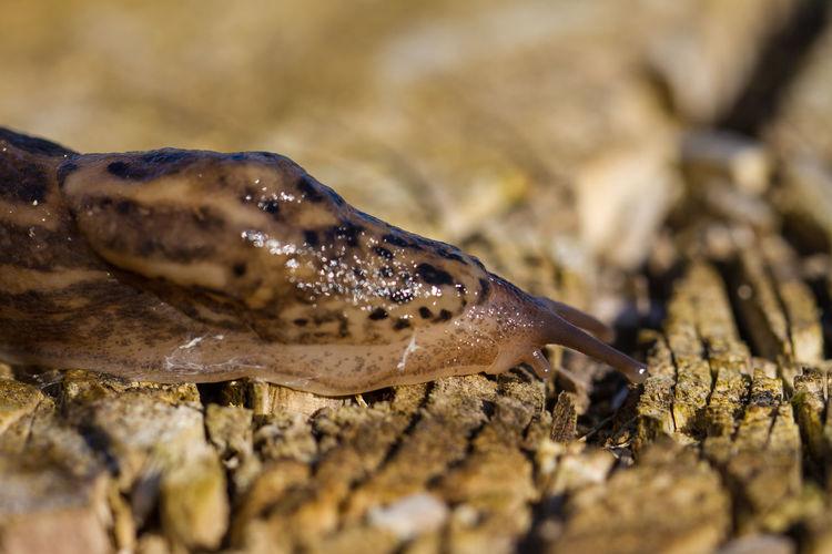 Close-up of a slug