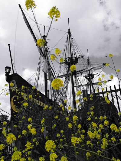 Yellow Outdoors No People Flower Yellow Flowers Boats Boat Paint The Town Yellow