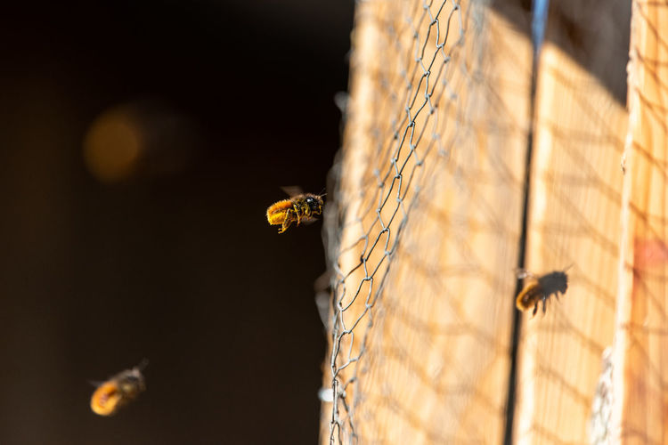 Close-up of bee flying