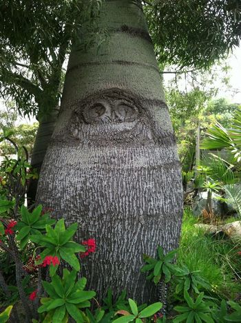 Does Anybody Else See An Owl On This Trunk?