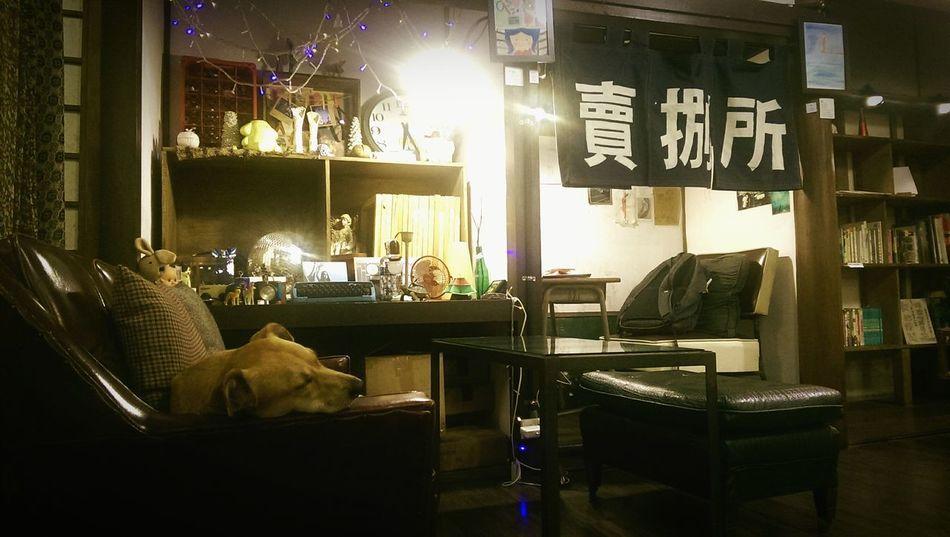 The Wall Live House Relaxing Yellow Dog  賣捌所 Yilan, Taiwan Cafe Sleepy