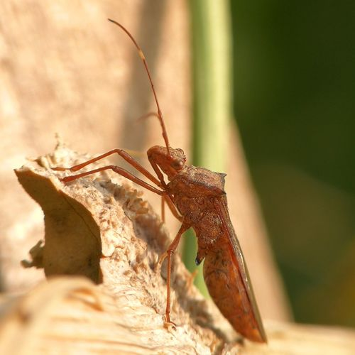 insect Macro Photography Insect Full Length Close-up Grasshopper Praying Mantis Animal Leg